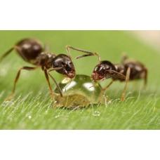 Защита от насекомых для взрослых и детей