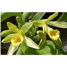 Райская орхидея для массажного масла