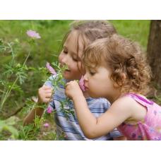 Влияние запахов на эмоционально неуравновешенных детей