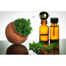 Биологические свойства лекарственных растений: обзор их антибактериальной активности