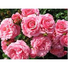 Косметическое применение эфирного масла розы
