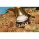 Активная регенерирующая сыворотка «Зеленый кофе и женьшень»