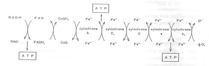 Перенос электронов и